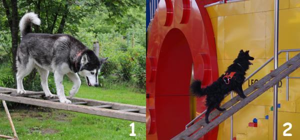 hunde agility geräte